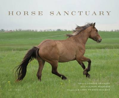 Horse Sanctuary: Running Free