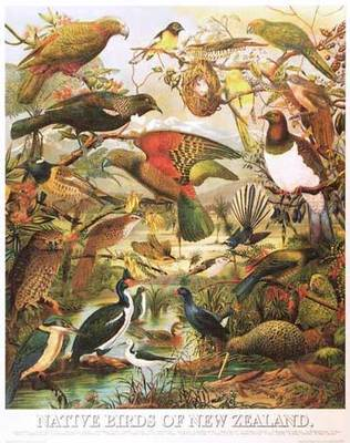 Native Birds of New Zealand Poster
