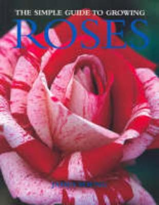 Simple Guide to Growing Roses