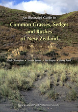 Homepage common grasses sedges rushes of nz 14 1024x1024