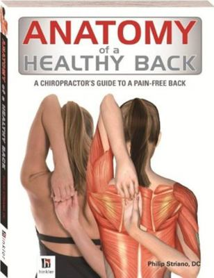 Anatomy Of Healthy Back