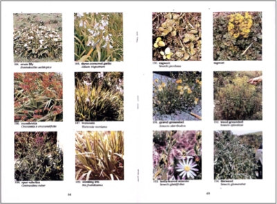 A Guide to the Identification of New Zealand Common Weeds in Colour