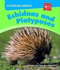 Echidnas and Platypuses