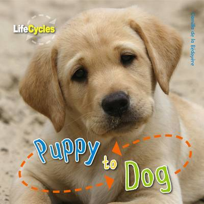 Puppy to Dog (Life Cycles)