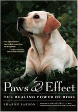 Homepage_sakson_paws_effect