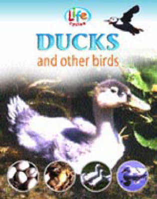 Ducks and Other Birds