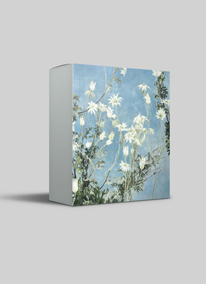 Cressida Campbell  Flannel Flowers Night & Day greeting card pack