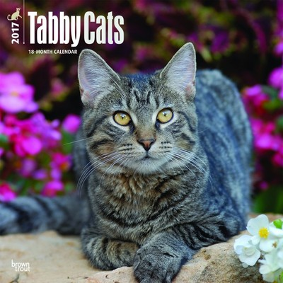 Tabby Cats Square Wall 2017 Calendar