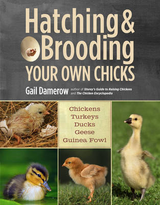Hatching and Brooding Your Own Chicks: Chickens, Turkeys, Ducks, Geese, Guinea Fowl