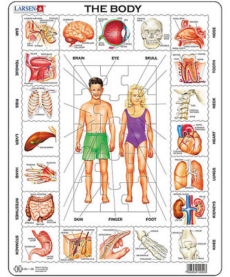The Body Puzzle