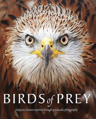 Birds of Prey Majestic Hunters Through Spectacular Photography