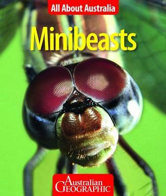All About Australia: Minibeasts