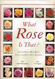 What Rose is That?