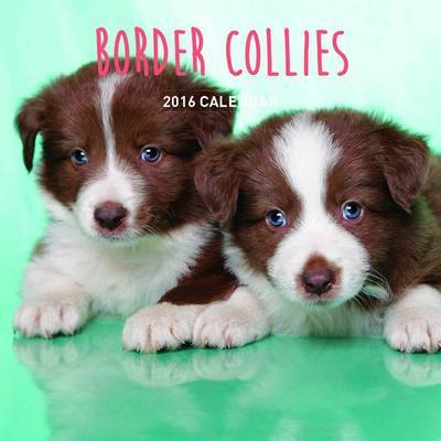 Border Collies 2018 Calendar