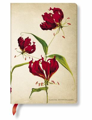 Gloriosa Lily Mini Painted Botanicals Lined