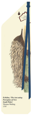 Echidna - Terra Australis Bookmark - TA006