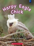 Harpy Eagle Chick - OLD EDITION