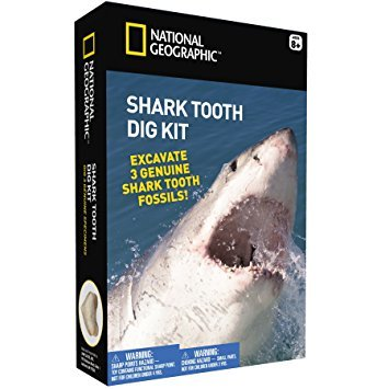 Shark Tooth Dig Kit (National Geographic)