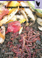Large compost worms 9781741204759