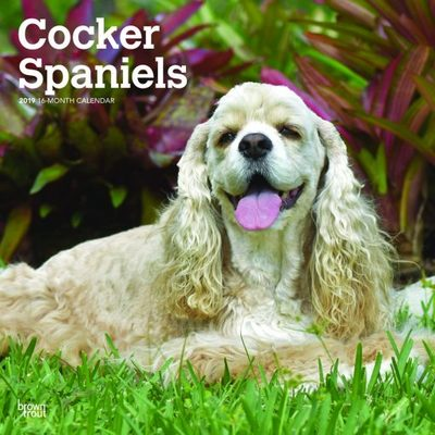 Cocker Spaniels 2019 Square Calendar