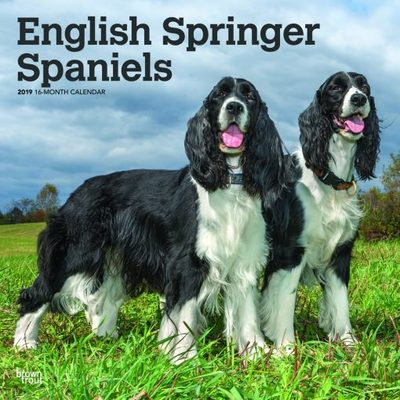 English Springer Spaniels 2019 Square Calendar