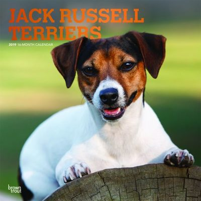 jack Russell Terriers 2019 Square Calendar
