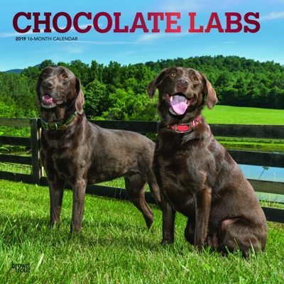 Chocolate Labs 2019 Square Calendar