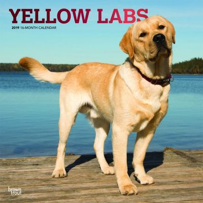 Yellow Labs 2019 Square Calendar