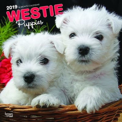 West Highland White Terrier Puppies 2019 Calendar