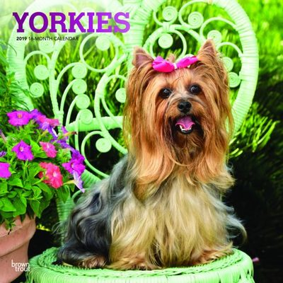Yorkshire Terriers 2019 Square Calendar