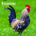 Roosters 2019 Square Wall Calendar