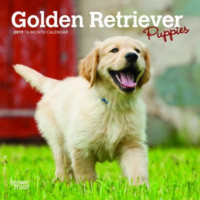 Golden Retriever Puppies 2019 Mini Calendar