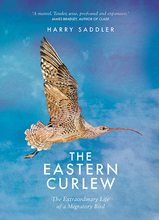 Homepage_the-eastern-curlew-by-harry-saddler