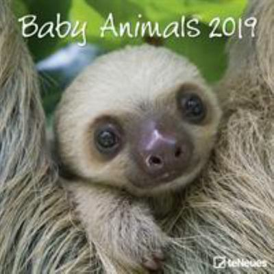 2019 Baby Animals 30x30cm Wall Calendar