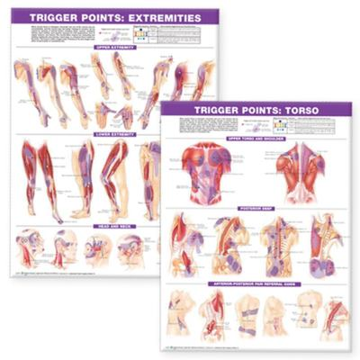 Trigger Point - Extremities and Torso