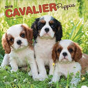 Cavalier King Charles Spaniel Puppies 2019 Square Calendars