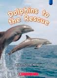 Homepage_dolphins