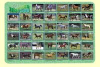 Homepage_painless-learning-placemat-horses34481167