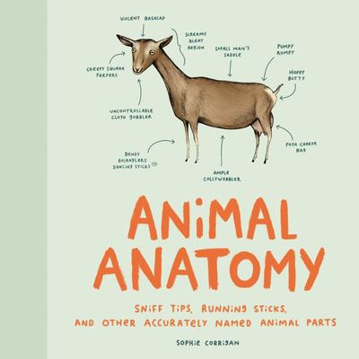 Animal Anatomy