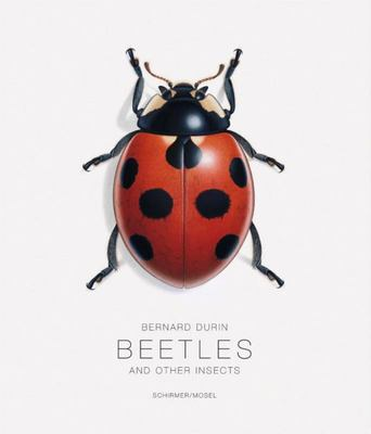Beetles - And Other Insects