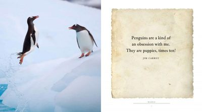 Waddle - A Book of Fun for Penguin Lovers
