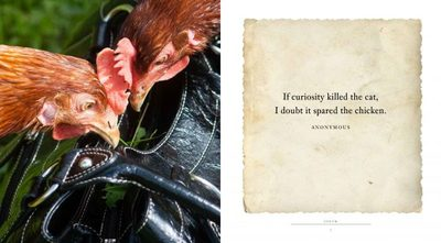 Cluck - A Book of Happiness for Chicken Lovers