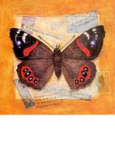 Homepage_red_admiral