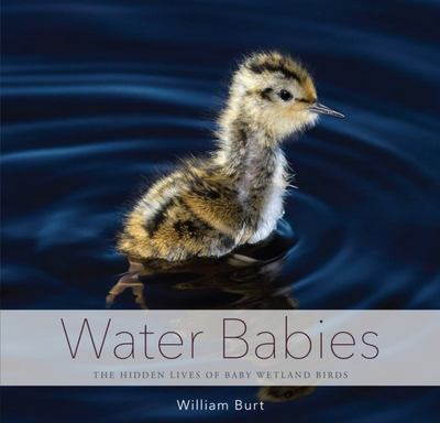 Water Babies - The Hidden Lives of Baby Wetland Birds