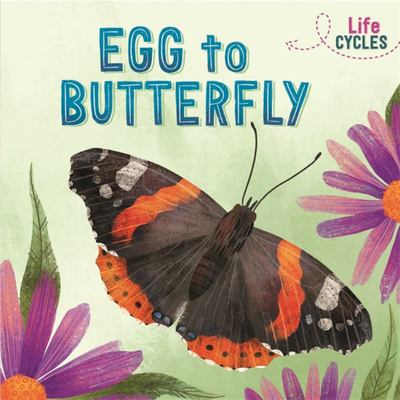 Egg to Butterfly