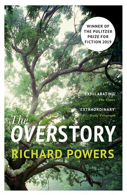 Large_overstory