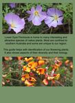 Flowering Plants of Lower Eyre Peninsula - An Illustrated Tour of the Native Flora