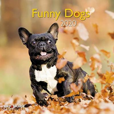 Funny Dogs 2020