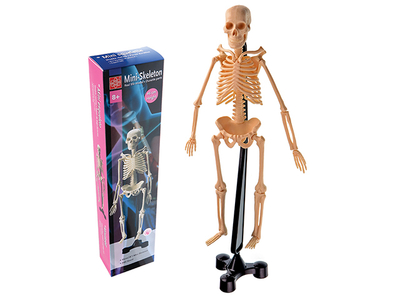 Mini Skeleton 46cm - FD046 - Modern