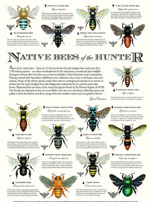 Native Bees of the Hunter Region Poster